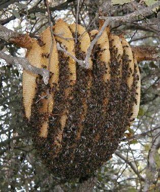 Nid d'abeille installé depuis quelques semaines
